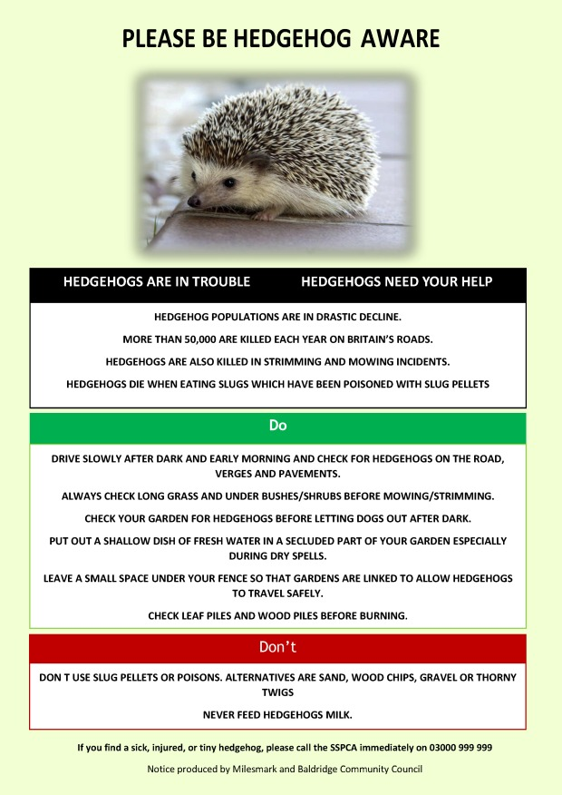 Hedgehog Poster.jpg